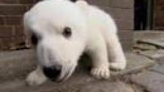 Cuddly Knut hits the big screen