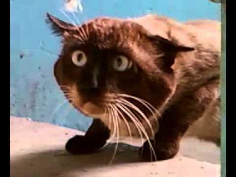 видео: Ну очень странный кот!