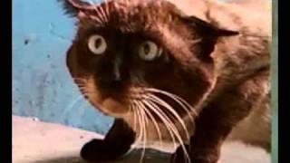 Ну очень странный кот!