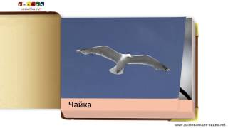 Развивающие карточки Домана для детей  'Птицы'  Часть 1