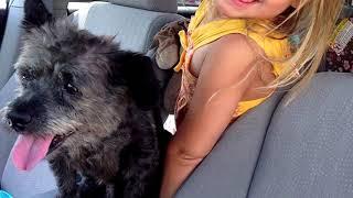 Женщина приютила умирающего от рака пса