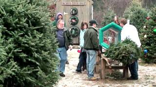 New Hampshire Christmas Tree Farm