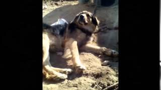 мой фильм о собаках