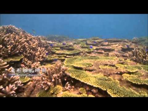 水面下的珊瑚樂園