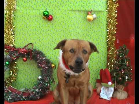 Dogs Singing Christmas Carols