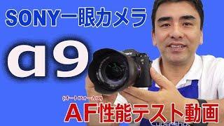 ソニーデジタル一眼カメラα9のAF(オートフォーカス)性能テストをしてみ...