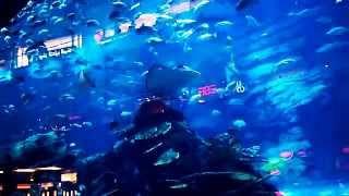 Аквариум в Дубай Молле, Aquarium in Dubai Mall, Sharks Dubai Aquarium, самый большой аквариум(Аквариум в торговом центре Дубая. Красота и масштабы аквариума впечатляют. Понравились скаты., 2015-02-23T14:53:25.000Z)