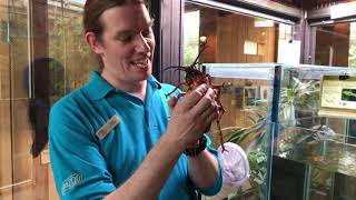 🎥 🐜 LIVE VIRTUAL ZOO DAY: Brilliant bugs in Monsoon Forest