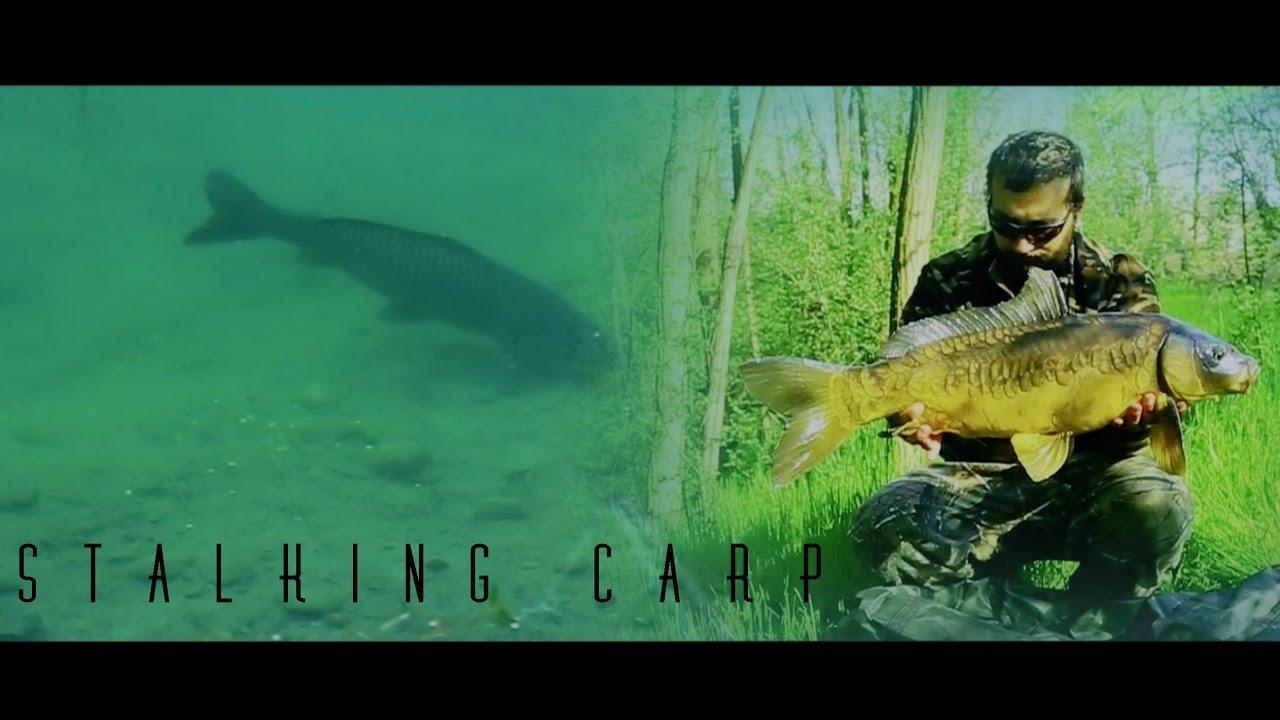 Carpfishing - The Taste Of Freedom - Stalking Carp - YouTube