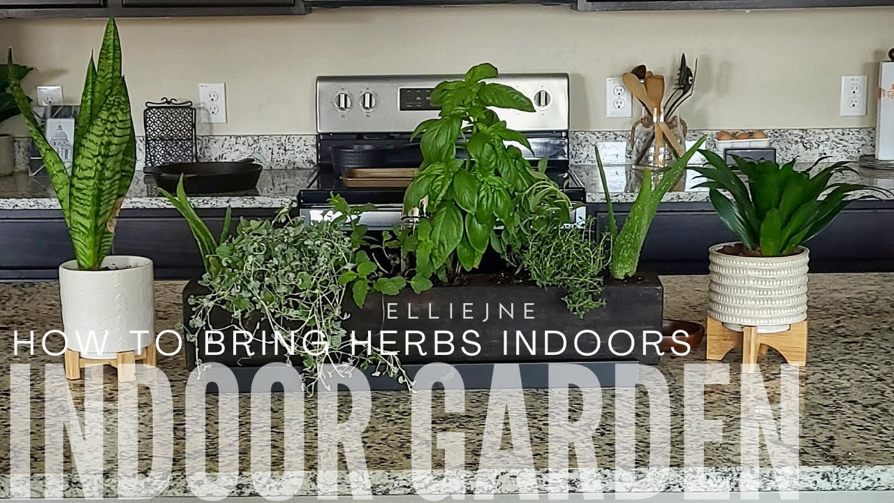 DIY Indoor Garden