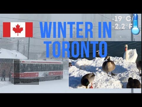 Winter In Canada || Toronto In The Winter: Christmas, New Year, Snow, And Icy Lakes!
