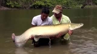 Ужасы Амазонии ¦ 11 Страшных Cуществ Амазонки