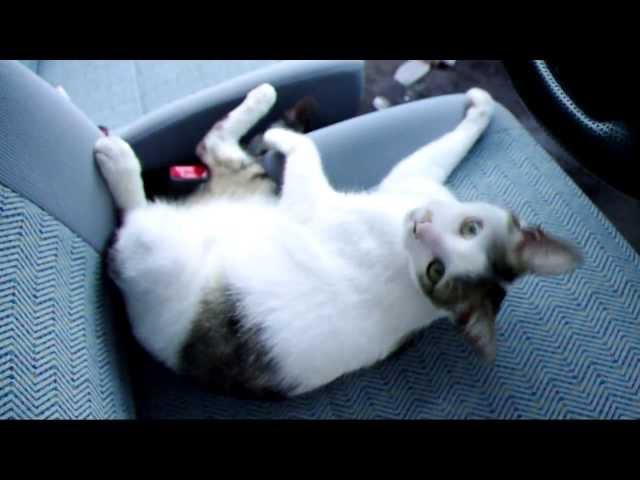 朝起きたら家の車に猫が