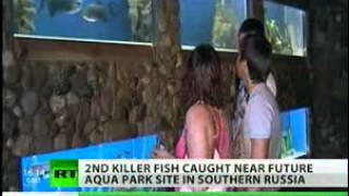 Second Killer Fish In A Row Caught Near Future Aqua Park