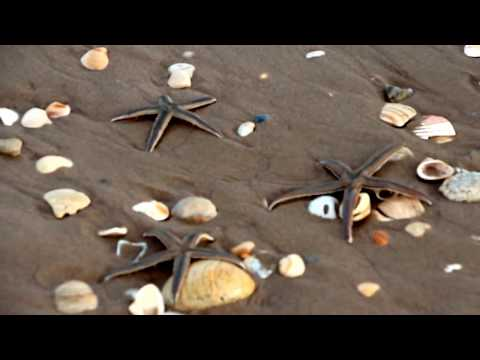 """Millions of Shells @ the """"Big Shell"""" section of Padre Island National Sea Shore"""