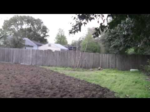 Tilling the useless lawn