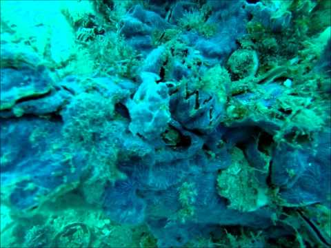 Wreck Diving - Madagascar Research & Conservation Institute