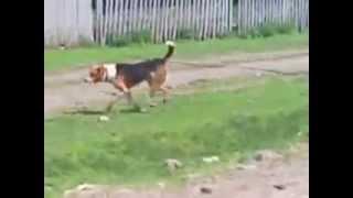 Суровые деревенские КОТЫ!!