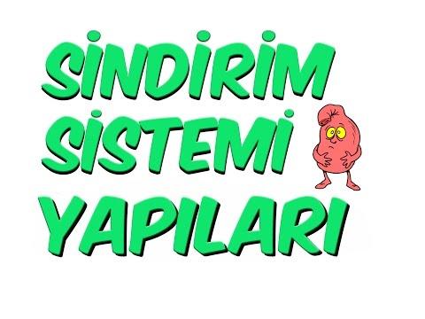 10dk'da SİNDİRİM SİSTEMI YAPILARI - 7.SINIF