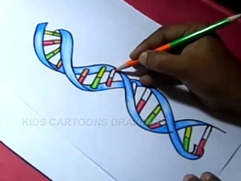 how to draw dna structure color drawing for kids - youtube model dna replication diagram