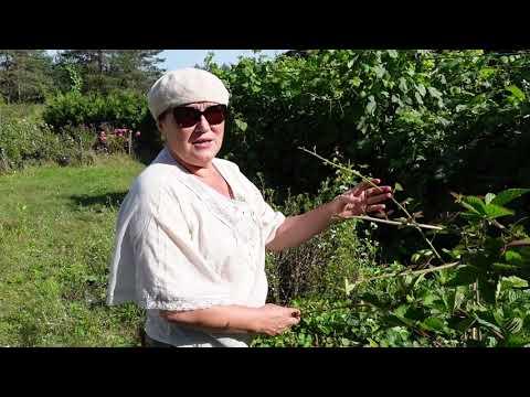 Как пермакультура работает на нашей плантации Часть 3