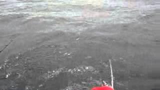 2008年 遠州沖 アコウダイの提灯行列