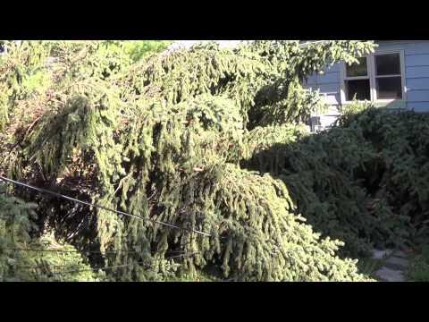 High winds August 10th RIP Backyard Fir trees