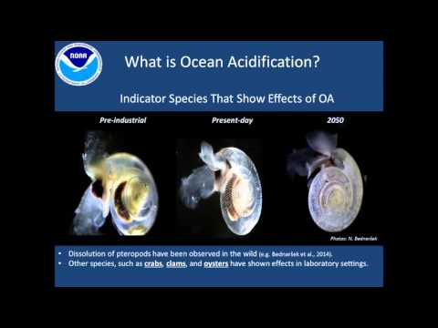 Jeremy Mathis, Impacts of Arctic Ocean Acidification - 31 March 2016