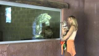 Met je hond naar de zoo