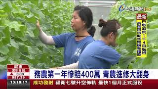 青農栽種有機小黃瓜一年營收破千萬