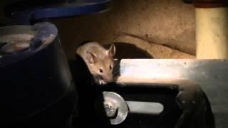 muis in de meterkast