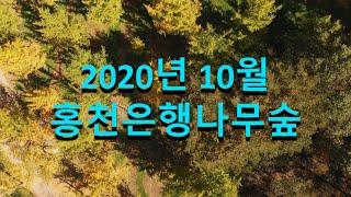 2020년 10월 강원도 홍천은행나무숲 - Mavic …
