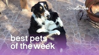 Download Best Pets of the Week (March 2018) Week 1 | The Pet Collective Mp3 and Videos