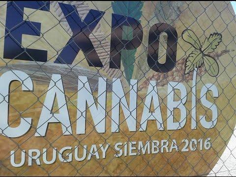 Expo Cannabis 2016 - marihuana legal y medicinal en Uruguay
