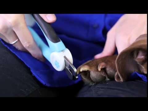 New Top Rated Pet Nail Clippers Review