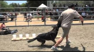 Chino Hills Pet Fair Demonstration - Falco K9 Academy