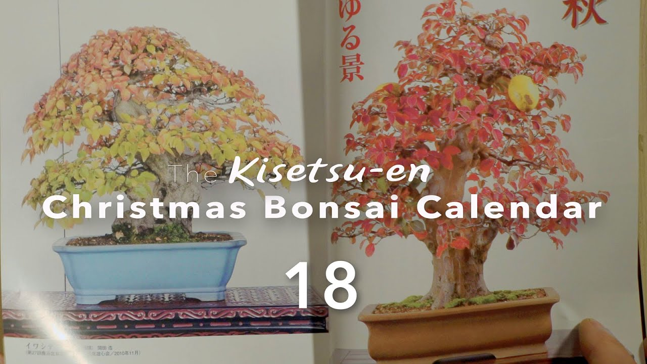 World Bonsai Magazine Calendar December 18 Youtube
