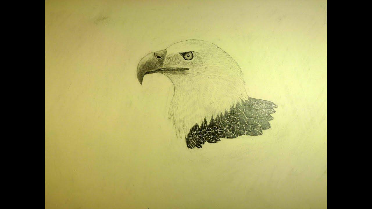 Cómo dibujar un águila - YouTube