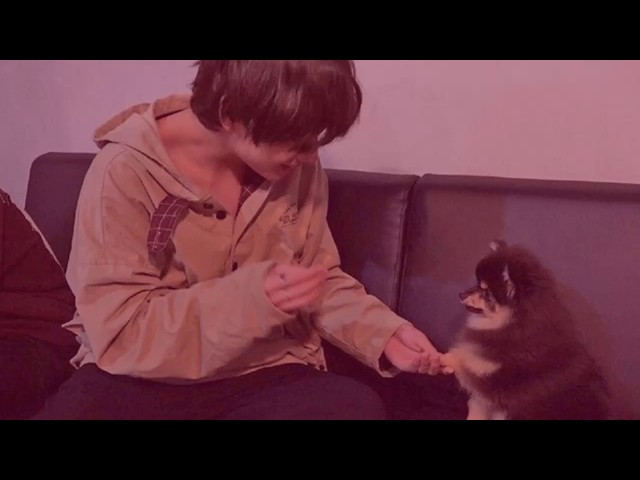 BTS with Yeontan | Taehyung puppy