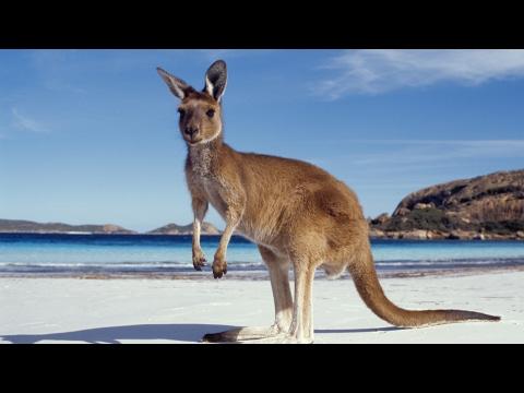 Wildlife reptile park Australia Sydney