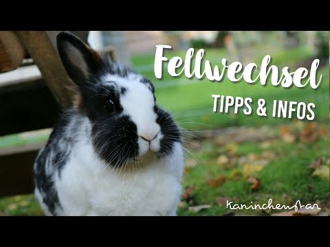 9 Tipps + Infos - FELLWECHSEL bei Kaninchen 🍃☀ | Kaninchenstar
