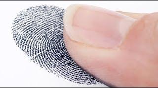 معلومة تهمك: هل يتم حذف بصمة الإصبع من قاعدة بيانات الاتحاد الأوروبي بعد فترة محددة؟