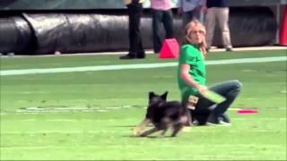 Hot Girl + Best Dog Tricks - Frisbee pooch amazing trained animal