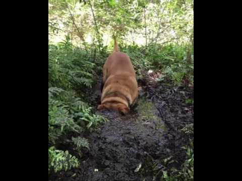 Dog Enjoying The Mud