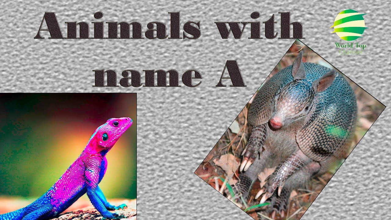 name an animal that starts with the letter n animals for animals that start with a 49694