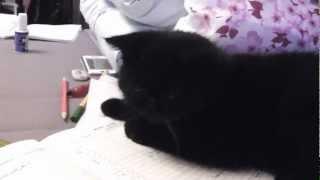 Cat and pen / Котенок и ручка