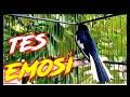 Tes Mintal Tarung Emosi  Mp3 - Mp4 Download
