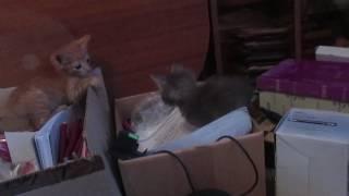 Дарим котят в добрые руки