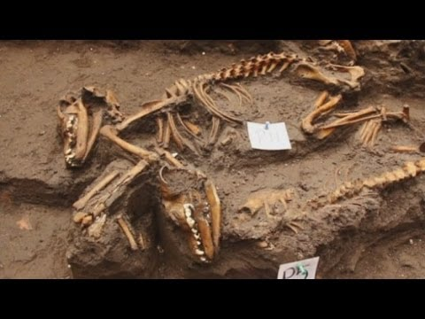 Ancient Aztec dog burial site discovered in Mexico