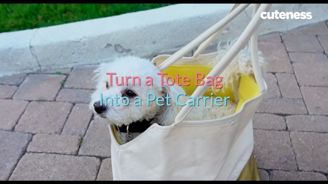 How To Turn Your Tote Into A Pet Carrier Cuteness Com Youtube